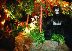 Rainforest Cafe, London Cover Image